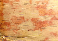 Birch bark with beautiful texture. For black and white background vector illustration
