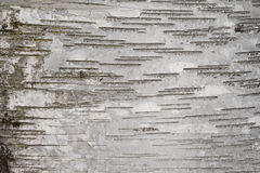 Birch bark Royalty Free Stock Photos