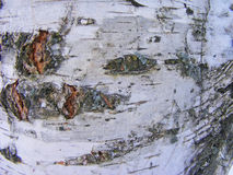 Birch bark. Element / Belarus or Russia Stock Photography