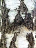 Birch bark. Stock Photography