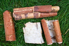 Birch bark on the grass Royalty Free Stock Photo