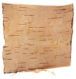 Birch bark isolated on white background Stock Images