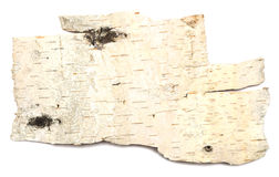 Birch bark. Isolated on white background Stock Images