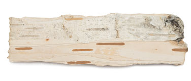 Birch bark Stock Photo