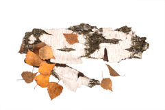 Birch bark and leaves Royalty Free Stock Photography