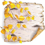Birch bark and leaves. Twisted piece of birch bark with yellow branches stock illustration