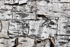 Birch bark pattern Royalty Free Stock Photo