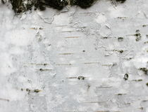 Birch bark texture background paper close up Stock Photos