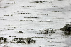 Birch bark texture background paper close up Stock Photography