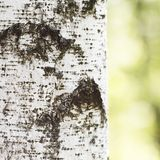 Birch bark Stock Photos