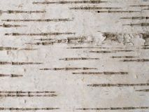 Birch bark texture Stock Image