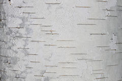 birch bark texture natural background paper close-up Royalty Free Stock Photography