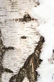 Birch bark, texture trunk birch, Stock Photos