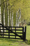 Birch behind a gate Royalty Free Stock Photography