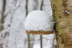 Birch Bracket under snow Royalty Free Stock Photography