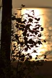 Birch branch with leaves in the rays of the setting sun on the beach stock images