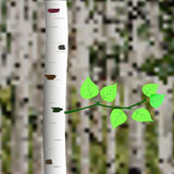 Birch branch. Trunk of birch and small sprig with leaves on grove background Stock Illustration