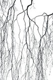 Birch branches. View of silhouette birch branches royalty free stock photography