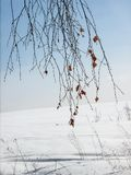 Birch branches against the blue sky. Birch branches against the blue sky on a clear winter day. Winter fragmentary landscape Stock Images