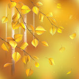 Birch branches. Autumn  background with birch branches Royalty Free Stock Photo