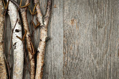 Birch branches background. Birch tree trunks and branches on natural wood background with copy space Royalty Free Stock Image