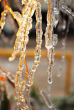 Birch branches covered with ice Stock Images