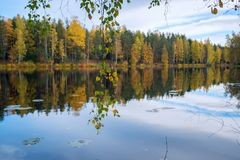 Birch branches with leaves above the water of the lake . Autumn landscape Stock Images