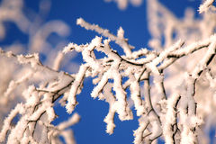 Birch branches with rime Stock Photos