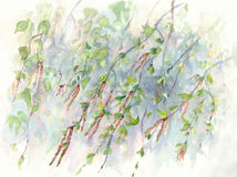 Birch branches watercolor background Royalty Free Stock Images