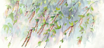 Birch branches watercolor background Stock Photos