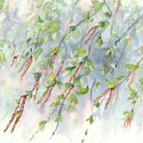 Birch branches watercolor background Stock Image