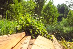 Birch broom lying on brown wooden porch. Of rural village bath. Photo closeup royalty free stock image