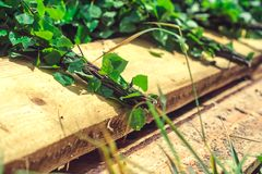 Birch broom lying on brown wooden porch. Of rural village bath. Photo closeup stock photo