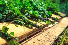 Birch broom lying on brown wooden porch royalty free stock photography