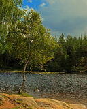 Birch on the coast of lake in HDR Royalty Free Stock Photos