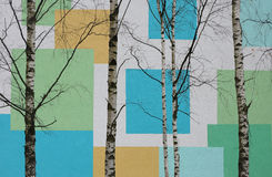 Birch colored background walls Royalty Free Stock Photography