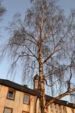 Birch and convent. Lit evening sun Stock Image