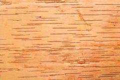 Birch cork background Stock Photography