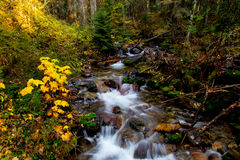 Birch Creek in the Autumn. This image of Birch Creek with autumn colors, mossy rocks and surrounding forest was taken in NW Montana Royalty Free Stock Images