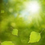 Birch Dream. Falling young birch leaves against sun Royalty Free Stock Photography