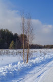 Birch on the edge of the winter road. Russian landscape Royalty Free Stock Photo