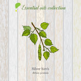Birch, essential oil label, aromatic plant Royalty Free Stock Photography