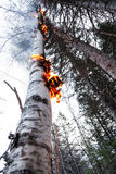 Birch on Fire after after a Lightning Stock Photos