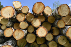Birch fire wood Royalty Free Stock Photo