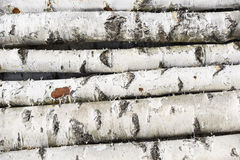 Birch fire wood Stock Image