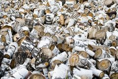 Birch firewood Stock Images