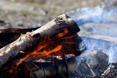 Birch firewood burning Stock Photo