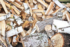 Birch firewood Stock Image