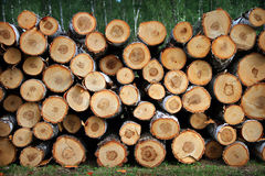 Birch firewood Stock Photography