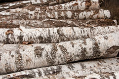 The birch firewood Royalty Free Stock Photo